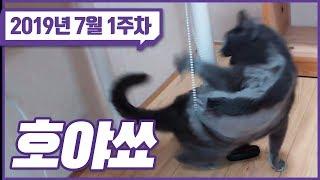 【7월 1주차 트게더 핫클립】 자야쇼 & 호야쇼 | 채팅창 트수 생존 확인 법 | 개가 짖는 타이밍이 참 얄궂다..
