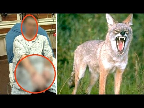 When Coyotes Attack