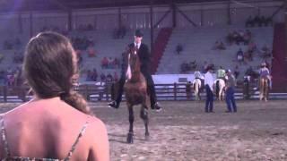 Walking Horses   Overton County Fair 2011