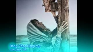 Bông hồng dâng Mẹ - Mai Thiên Vân [Thánh Ca]