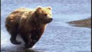 Watch Mountain Goats Going To Alaska video