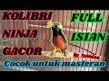 Kolibri Ninja Gacor Full Isian Cocok Buat Masteran  Mp3 - Mp4 Download