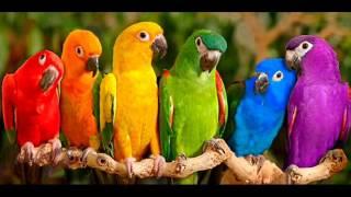 Lagu Anak - Burung Kakak Tua