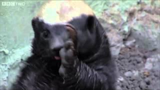 Honey Badger Nae Nae Vine by Jamie Zano