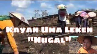 Kayan Uma leken
