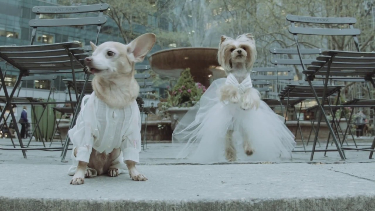 Love Actually (Dog Edition) - YouTube