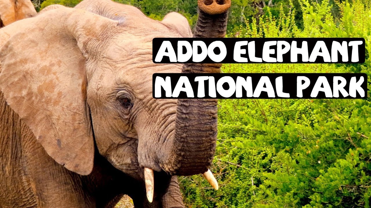 ADDO ELEPHANT NATIONAL PARK AND RIVER SAFARI || TRAVEL SOUTH AFRICA