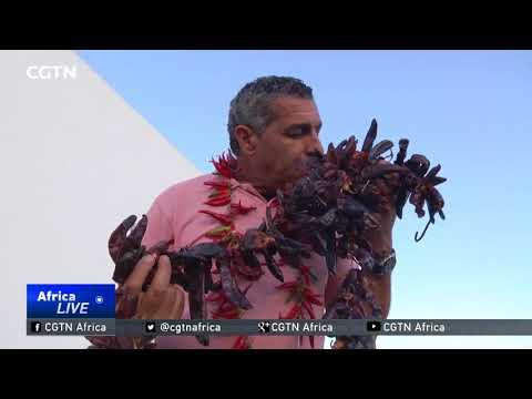 Tunisian culinary artist celebrates traditional harissa paste
