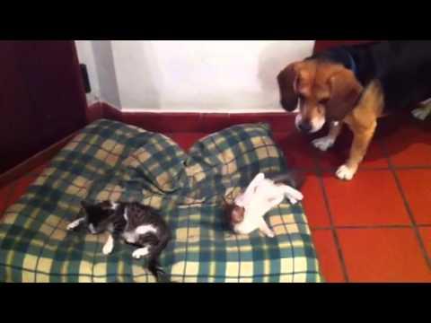 Giochi di cani e gatti youtube for Youtube cani e gatti