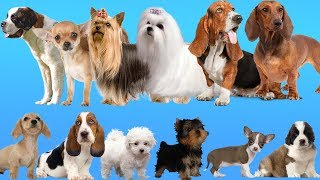 Help the Puppies find their Mother. Dogs Baby Find Mom. Animals Names and Sounds for Kids.