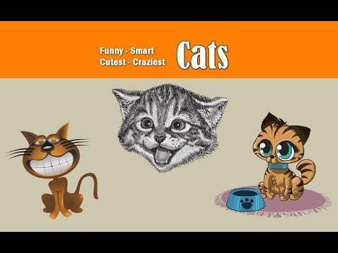 Cats are very funniest and Crazy pets in the World - Smart Funny Cats Compilation