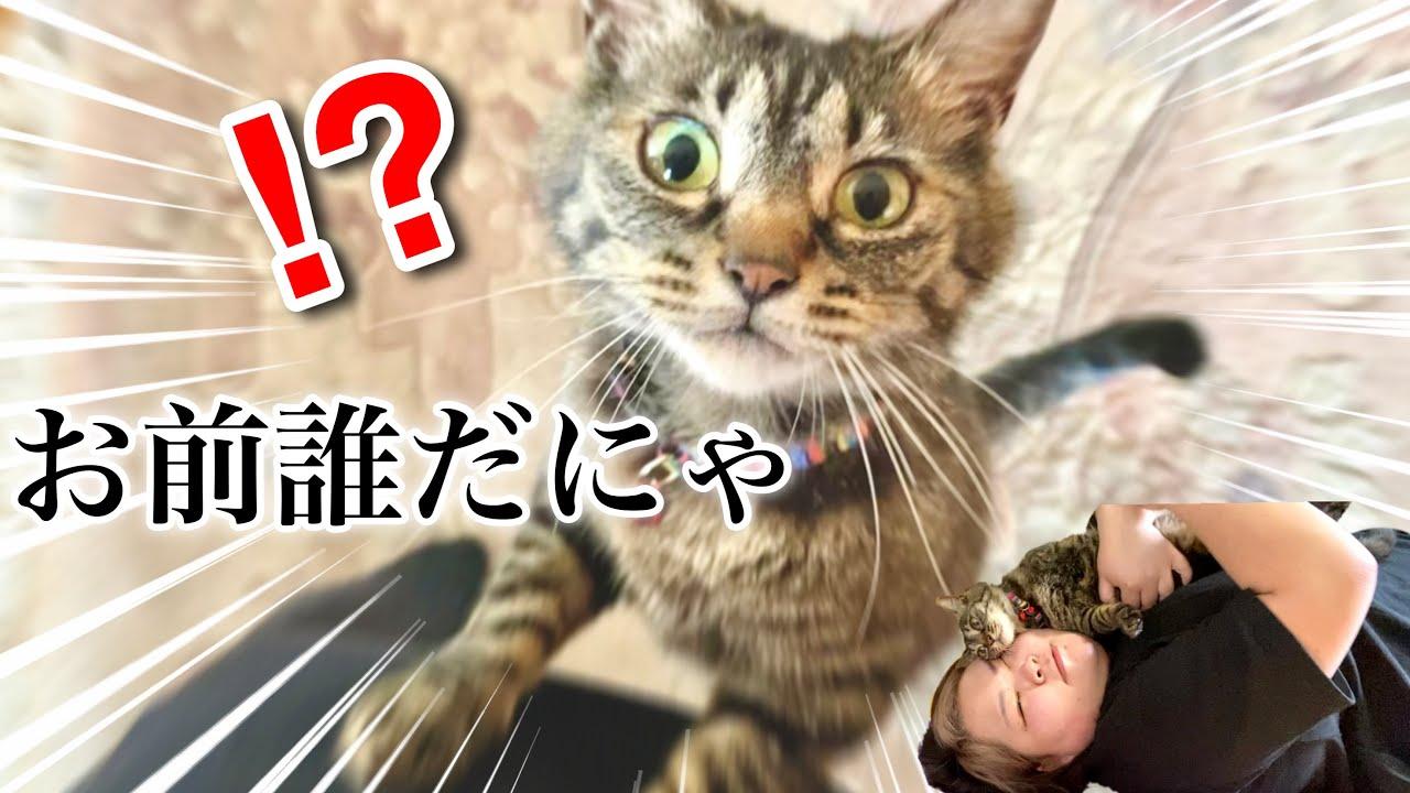 【尊い】久しぶりに実家に帰ったら猫の反応が、、、【たらこちゃん】