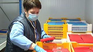 Дополнительные меры на фоне роста заболеваемости коронавирусом вводят в российских регионах