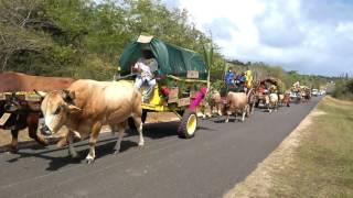 Défilé de charrette à Veux-Fort Marie-Galante / Rando quad Aïchi fun.