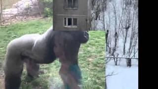 Шокирующее нападение животных на людей/shocking attack animals to humans