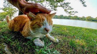 公園を歩いていたら木陰で休む猫に声を掛けられた