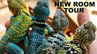 NEW REPTILE ROOM/HOUSE TOUR!