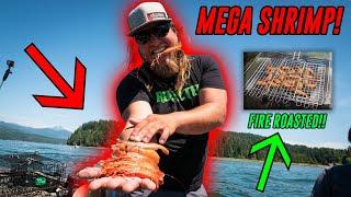 MEGA Shrimp FISHING Fire Roasted CATCH &amp COOK!