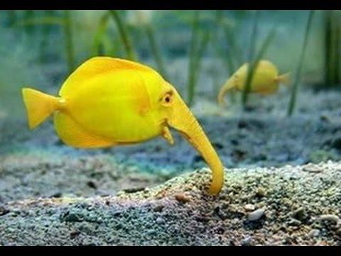 редкие рыбки
