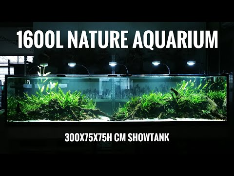 UPDATE 1600L (300x75x75h cm) Nature Aquarium #FAAO #Aquaflora #Aquascaping