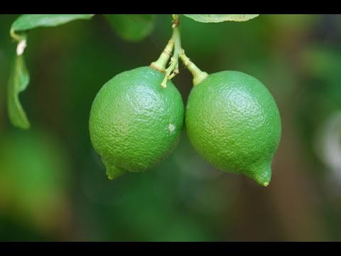 LEMON. POWERFUL HEALTH BENEFITS OF GREEN LEMON, HEALTH BENEFITS OF LEMON, WHY WE EAT LEMON