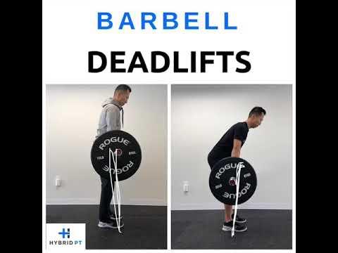 Conventional Barbell Deadlift