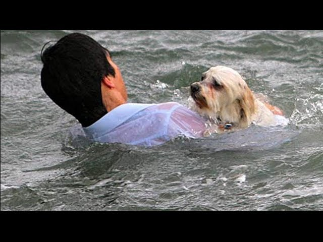 17 INCREDIBLE Pets Who Saved Their Owners!