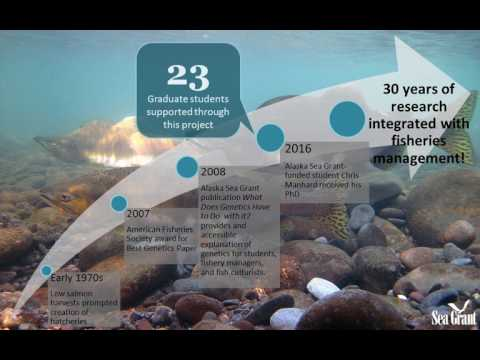 Alaska Sea Grant salmon research timeline