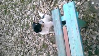 неугомонный пёс