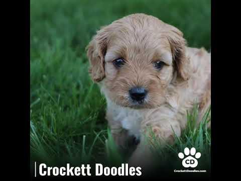 Crockett Doodles | FunnyDog TV