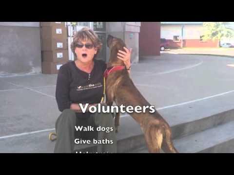Wanted Volunteer Dog Walkers CCAS
