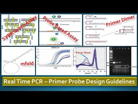 Real Time Pcr Primer Probe Design Guidelines Youtube