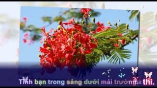 Mùa hoa phượng nở