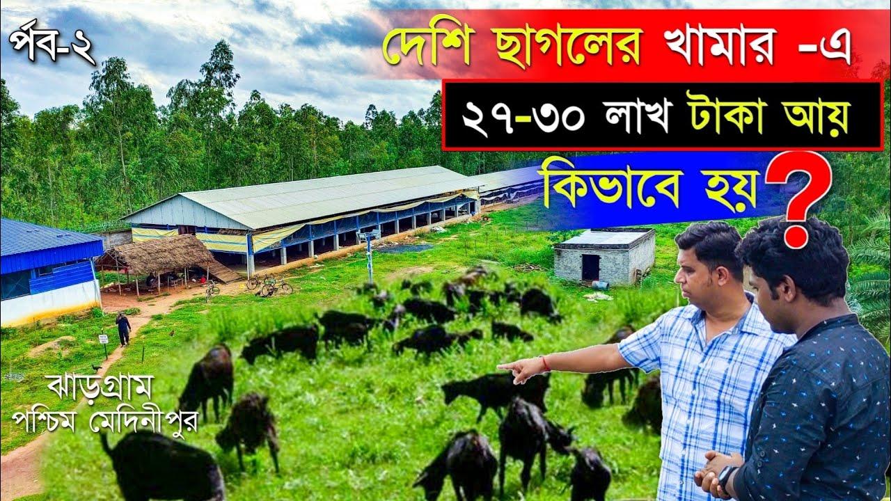 দেশি ছাগলের খামার-এ 30 লাখ টাকা আয় কিভাবে হয়   Black Bengal Goat Farming   GOAT FARM   GOAT FARMING