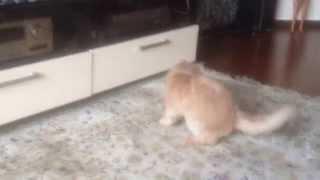 Cмешные животные - кот и хвост