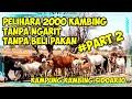 Luar biasa.! pelihara 2000 ekor kambing tanpa perlu ngarit - Cara Ternak kambing sukses