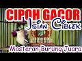 Sirtu Materi Mewah Cipoh Gacor Isian Ciblek  Mp3 - Mp4 Download
