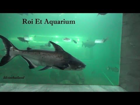 Roi Et Aquarium tour, Roi Et city Thailand.