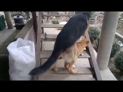 Собака Занимается Сексом С Кошкой
