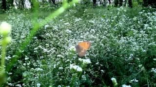 Поле цветов в лесу Fly IQ 446 video HD