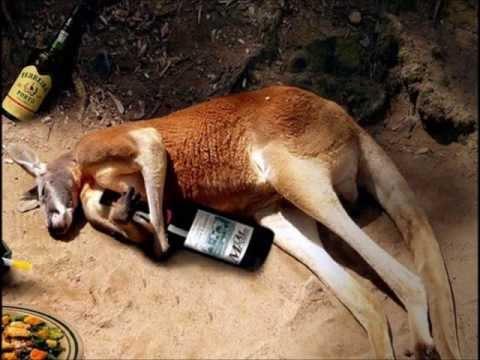 Kangaroo Rap by