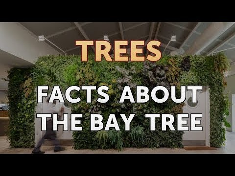Facts About the Bay Tree
