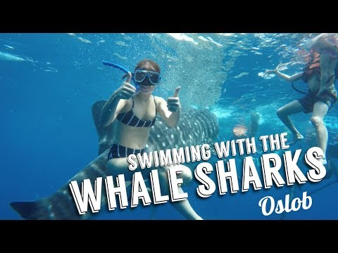 SWIMMING WITH THE WHALE SHARKS IN OSLOB | Andi Manzano Reyes