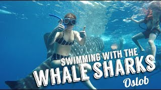 Swimming with the Whale Sharks In OSLOB, Philippines | Andi Manzano Reyes