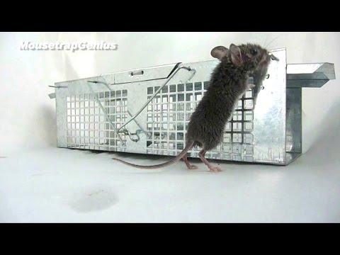 NEW! - Havahart 1020 Mouse Trap FULL TEST & REVEW
