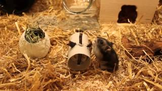 Beschäftigung für Hamster
