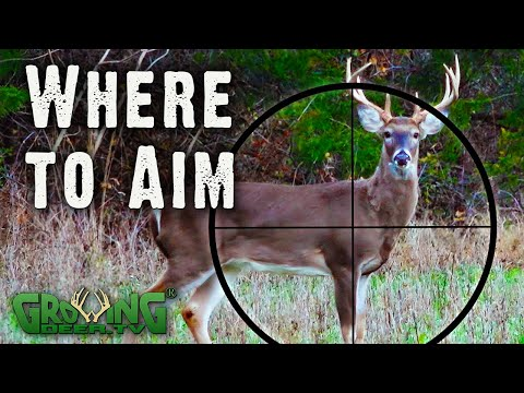 Where to Aim: A Guide for Deer Hunters from Real Hunts (#564)