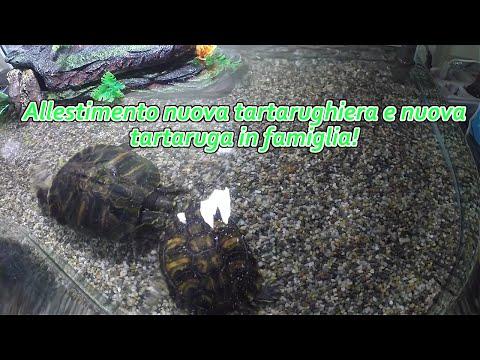 Come montare un filtro per tartarughe doovi for Filtro per tartarughiera