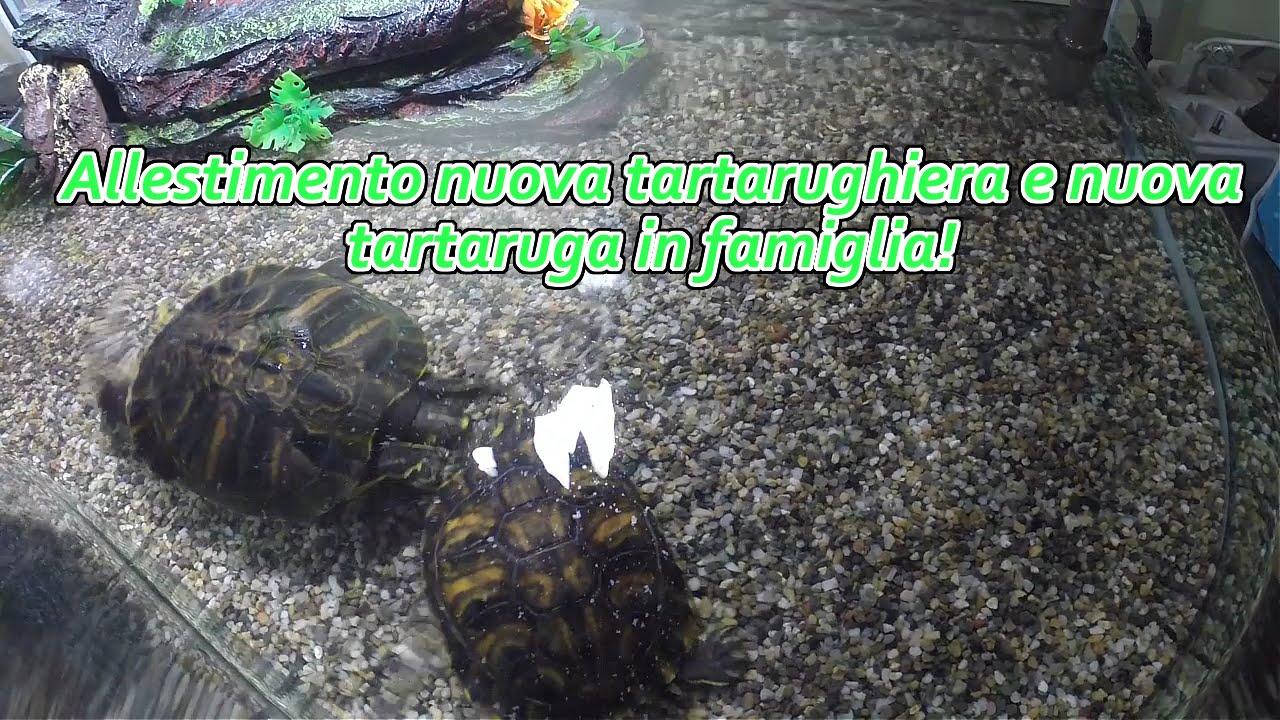 Allestimento nuova tartarughiera e nuova tartaruga in for Tartarughiera