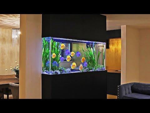 A Day with an Aquarium Designer - Amin Aquatics